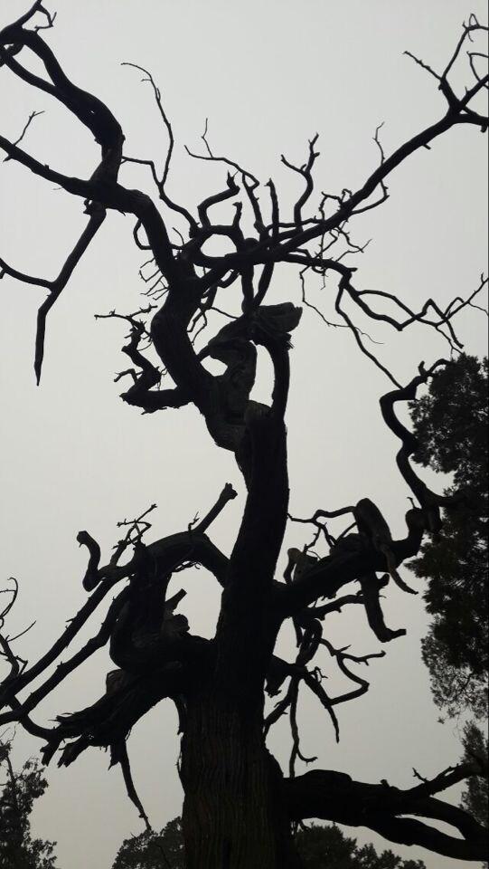 树丛黑白素材
