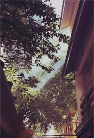 旧城黑森林
