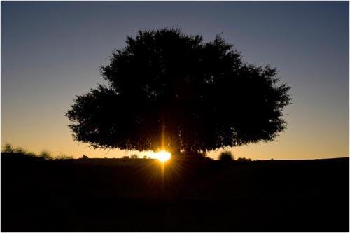 agai|榕树下原创