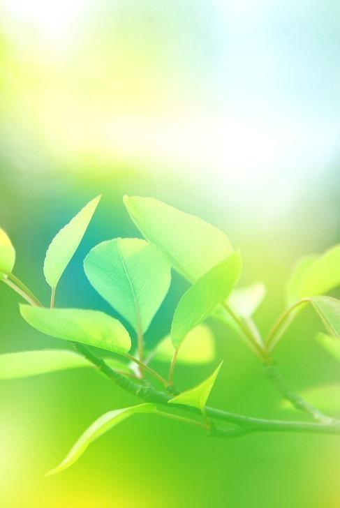 绿叶阳光背景-24绿叶背景 清爽绿叶背景素材图片